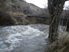 Cottonwood Creek below Fivemile Creek near Boise, ID - USGS file photo